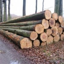 东莞国外红木|原木进口需要文件