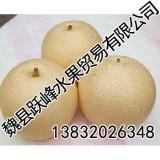 邯郸鸭梨【跃峰水果贸易】提供雪花梨
