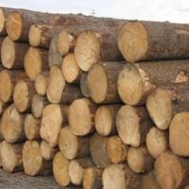 天津木材进口清关公司