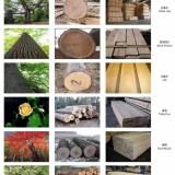 上海进口非洲丨北美丨南美丨东南亚丨木材报关,进口木材清关代理