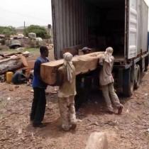 南美铁木豆原木进口图片