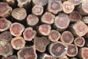 南美铁木豆原木进口清关