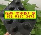 桂林)塑料透水疏水板∑抗穿刺排水板15853873476