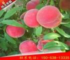 福丽桃树苗基地