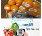食品标签喷码机 大宽幅食品标签喷码机