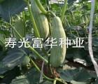 新疆贵族南瓜种子