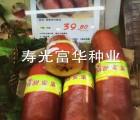 进口南美洲火腿瓜种子
