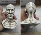仿真人体骨骼造型定制 医学实验模型手办 器官手办