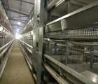 安徽四层H型养殖设备