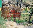 专业生产安装黑熊棕熊黑钱豹笼舍网围网围栏产品,2017年处理