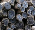 加拿大/墨西哥橡胶木进口报关