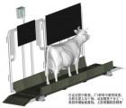 佑安诺诚YC-XM-NFQ-01牛只专用电子称重分群设备