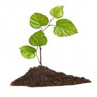 首次进口国外林木幼苗报关流程和资料