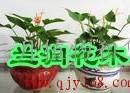 杭州杭州植物租赁公司杭州植物出租,花草装饰公司杭州花卉植物公司杭州花卉租