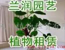 杭州杭州花卉租赁公司