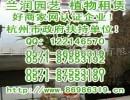 杭州杭州花卉出租,杭州 植物租赁,杭州 植物出租,杭州植物杭州办公室租植物