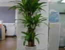 杭州杭州盆景绿植出租公司+花卉植物摆放服务
