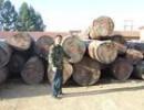 广州非洲奥古曼原木进口报关操作流程|原木进口报关操作流程