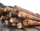 广州个人企业如何进口木材|原木|木材进口报关代理