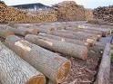 广州顺德柚木原木木材进口报关流程|木材木方进口清关手续