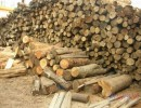老挝花梨木上海进口清关公司/木材进口报关报检代理