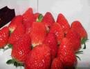 山东法兰地草莓苗 山东章姬草莓苗 山东红袖添香草莓苗