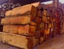 采购木材原木广州深圳港进口办理什么手续