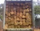 东莞黄埔港木材进口需要什么资料|物种证办理需要时间