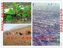 苏北林之源林业基地 107杨树苗 108杨树苗