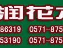杭州写字楼花卉租摆杭州