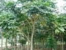菠萝格原木进口全套代理,巴西有机食品进口代理