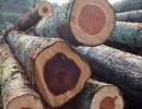 东莞 非洲木材进口税率是多少|黄埔港木材进口清关代理