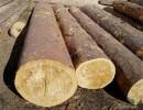 俄罗斯云杉木材进口流程