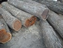 木材进口报关报检 北美木材进口报关费用 进口木材报关代理