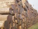 澳大利亚原木进口报关