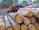 上海专业进出口清关代理 木材进口报关需要哪些资料