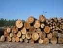 原木进口一般贸易报关流程