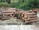加纳木材进口报关代理