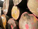 巴西花梨进口报关代理    上海木材进口报关报检