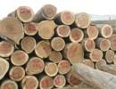 赞比亚血檀原木进口清关 18824333450