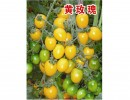 优质抗病樱桃番茄种子――黄玫瑰