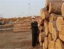 上海代理木材进口报关公司