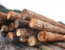 梢木木材进口报关需要什么资料
