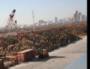 深圳进口东南亚阔叶黄檀非濒危证如何办理