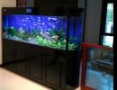 上海亚克力有机玻璃板材鱼缸