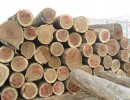 重庆木材进口报关报检手续办理的难度