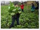 扬州农业生态旅游 苏州农业生态旅游 仪征农业生态旅 企业行