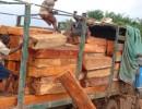 东南亚原木木材进口报关清关等一条龙服务