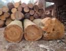 黄埔港木材|红木进口报关|清关代理|木材进口报关手续|流程|