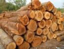 美国木材进口报关流程|如何报关木材